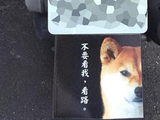 囧哥:熊猫可以懒,但你不能