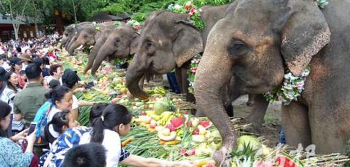 """""""世界大象日""""在云南野象谷举行"""
