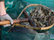 浙江在全国率先推出冷链食品追溯系统