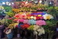杭州吳山花鳥城近日開市營業時間有調整 快來淘春天吧