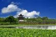 上海海湾国家森林公园美景