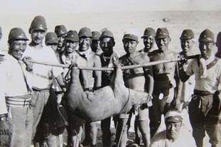 二战日军抓猪偷羊嘴脸