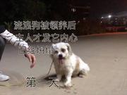 视频:流浪狗被攻击后爱躲墙角 训犬师悉心照顾逐渐恢复