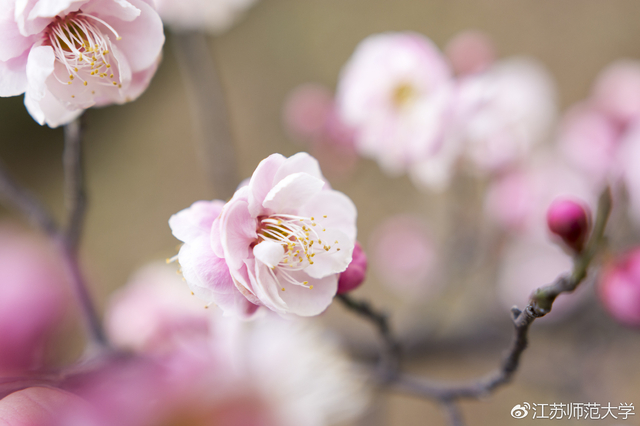 师大赏花攻略 春风十里不如和你来看花