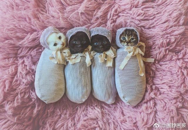 摄影师爸比给女儿和家里的4只小奶猫拍了一组照片,萌化了。