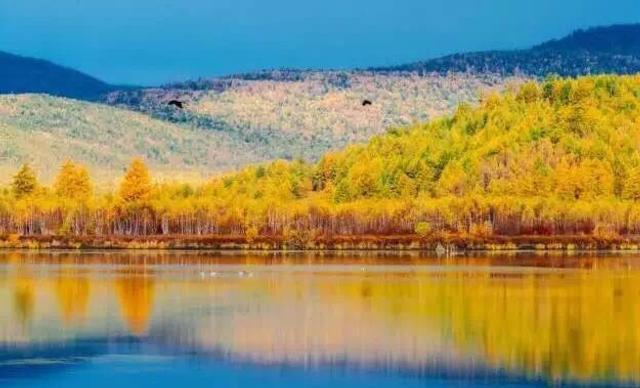 秋季的草原很美,秋季的森林更因为植被各类繁多而在秋霜下被染成万紫千红,让整个大兴安岭一夜之间色彩斑斓。【图文:新浪博客@湖光秋水】