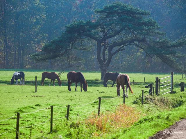 """荷兰的森林资源与欧洲其他国家是比较少的,自13世纪起填海造田,增加了国土20%的面积,故有""""上帝造海,荷人造陆""""的说法。如今荷兰的森林都是16世纪后营建的,大多数分布在荷兰的东部。【图文:新浪博客@千江moon】"""