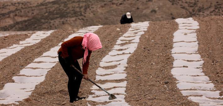 壮观,硒砂瓜绘就的大地画卷