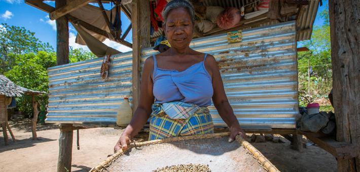 菲律宾古法咖啡成为抢手货