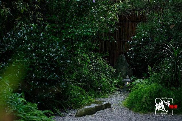 九月,山色空濛。一场绵绵秋雨过后,热闹的山城也在某个角落迎来一份静谧,在这被雨水洗过的诗意小院儿里,廖丹霞时常静坐茶室,在一个人的茶汤中照见自已,寻找诗意新人生。