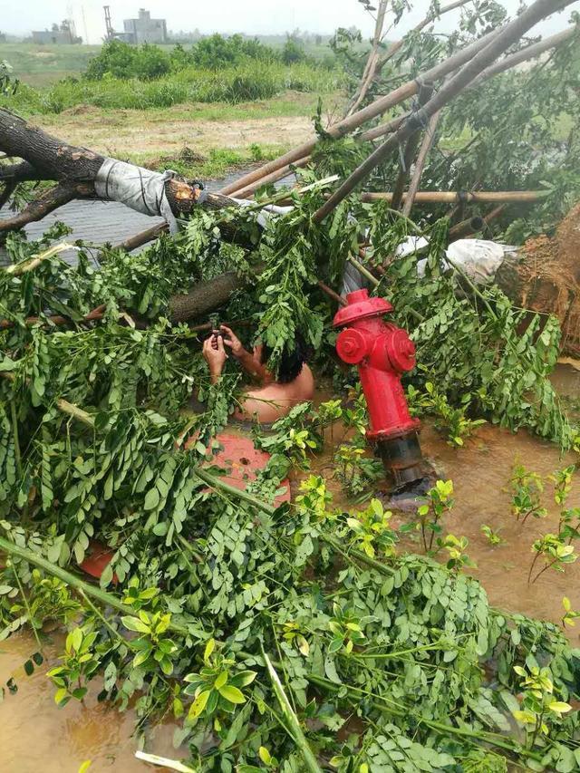 """7月16日,受2017年第4号台风""""塔拉斯""""影响,三亚迎来强降雨天气。当天上午10时许,海南一供水公司管网部经理陈永国接到海棠区指挥中心派来的工单,便连忙和一名同事赶往现场。""""听说台风把树吹倒了,挖掘机清理时又把树旁的消防栓挖断了,水一直喷出来。"""""""