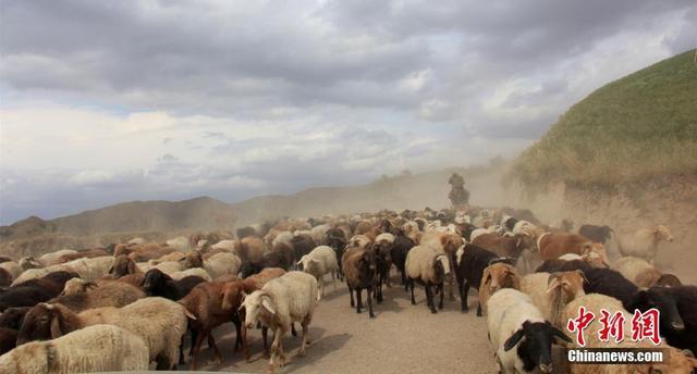9月13日,位于新疆天山西部的伊宁县牧民正赶着一群群牛、羊、马,从托乎拉苏山区牧场转场。随着天气转凉,草地泛黄,牧民们开始了大规模的牲畜转场。自9月初开始,当地牧民陆续从深山的夏季牧场向山下100多公里的秋牧场转移,他们将利用半个月的时间,完成整个秋季转场。图为哈萨克族牧民赶着大批牛、羊、马向着山下的秋牧场迁移,场面甚是壮观。 史玉江 摄