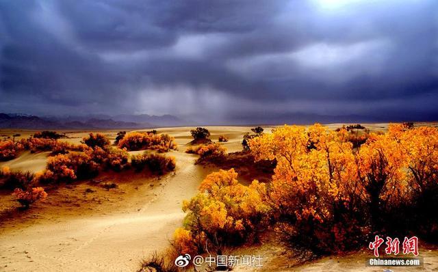 在柴达木盆地的青海省格尔木市以西60公里,有青海唯一,也是世界上海拔最高的胡杨林。这里的胡杨林南靠巍巍昆仑山脉,北面是茫茫戈壁盐滩,夹在其中的沙漠化地带里,尤其显得珍贵。林中伴生著芦苇,梭梭,红柳,盐爪爪,骆驼刺等沙生植物,与这里栖息的野生动物野鸡、狐狸、狼、野兔等,共同组成一个特殊的生态系统。每年的十月,这里的胡杨就会由浓绿变为金黄,似乎将整个沙漠都染成了金色,令人感受到大自然的美丽和生命的顽强。(记者 孙睿)