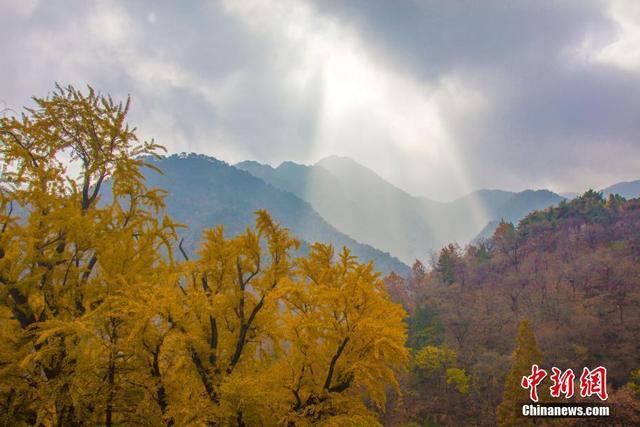 """季节又到深秋,五岳之首的东岳泰山也步入醉美季节。玉泉寺千年的银杏又黄了叶子,王母池一泓碧水层层叠叠倒映着灿然黄叶。在水光山色间,甘愿做池中的小鱼,""""游""""在醉美泰山。 王母池位于山东省泰安市城区环山路东首,虎山水库南,古称""""瑶池""""。王母娘娘在汉代时成为重要的中国民间信仰。三国曹植有""""东过王母庐,俯观五岳间""""的诗句,唐李白也有""""朝饮王母池,暝投天门阙""""的吟咏。 山里人 摄"""