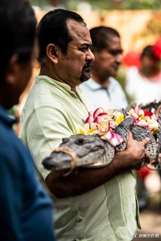 """墨西哥圣佩德罗瓦梅卢拉市市长维克托·阿吉拉尔·里卡德斯与一条小鳄鱼成婚。""""新娘""""是一条长着尖尖的牙齿鳄鱼,它的嘴被绑上了,以免在必须履行的接吻环节咬人。这场象征性婚礼是一年一度纪念圣彼得的庆祝活动的一部分。这样的""""新娘""""你敢娶吗?"""
