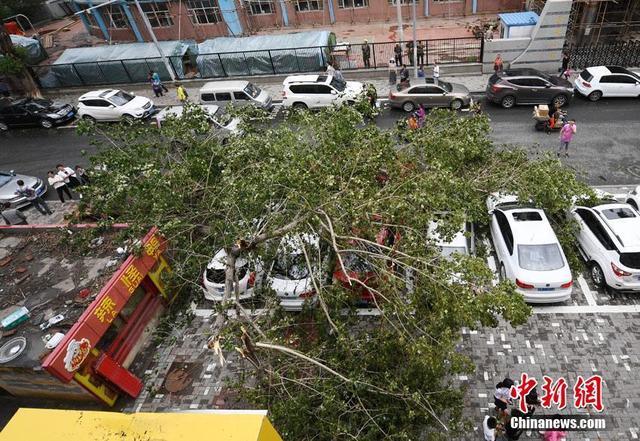 7月12日,长春市崇智路上一棵大树突然连根倾倒,停靠在路边的近十辆车被砸,其中最严重的一辆,车体已被砸变形,玻璃碎裂。据周围商户讲,当时并未刮大风,不清楚树为何会突然倒下。张瑶 摄