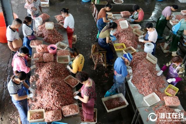 8月8日,舟山国际水产城虾类加工场一片繁忙,一批女工正在用手剥虾、去壳。