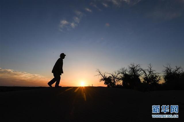 """9月23日,班都走在一座沙丘上,查看周边的胡杨。  """"这里有了水,胡杨林就能绿,生态环境就会恢复得越来越好!""""望着几天前刚刚恢复来水的河道和又吐出新绿的胡杨树,班都老人欣喜而坚定地说。  81岁的蒙古族牧人班都,生活在内蒙古自治区额济纳旗策克嘎查。这里位于我国第三大沙漠——巴丹吉林沙漠边缘,气候干旱,环境恶劣,周边牧民纷纷搬走,班都成为方圆20多公里内唯一的住户。当地政府为他在城里安置了房子,但他舍不得离开这片生他养他、曾经胡杨成荫的土地。  班都老人在戈壁沙漠中承包着5万多亩草场,其中3万多亩分布着胡杨林。20世纪70年代,流经他家附近的河道断流,部分胡杨林也逐渐枯萎。为了守护这些有着上百年历史的胡杨,班都在戈壁中挖井取水灌溉。30多年来,他先后挖了10多口水井。   2017年8月,为彻底改变缺水状况,班都老人卖掉8头牛和3匹骆驼,花了8万多元疏通被风沙掩埋的河道,引水蓄水。2018年7月,中国绿化基金会得知班都的事迹后为他募集了10万余元资金,用于挖深河道、打造水坝。10月初,在当地政府的支持下,断流40多年的河道终于又见来水,流进了老人的这片胡杨林。  """"我就想留在这里,这里的胡杨需要我。""""班都老人不舍不弃,如胡杨般深深扎根在大漠,默默守护。  新华社记者刘磊摄"""