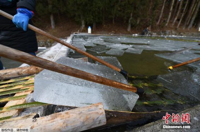 当地时间1月10日,日本栃木县日光市一个池塘上,工人们用竹竿运送切割整齐的天然冰。这些冰砖经过几个月的储存,被运往东京的高端餐厅,用以制作夏日甜点。