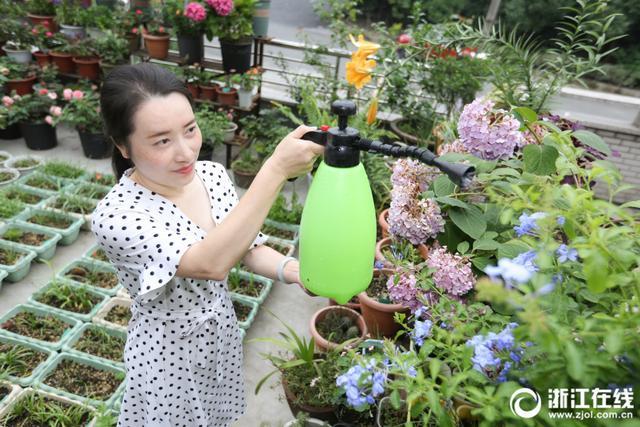 杭州萧山临浦的85后女生陈海娜,家里的阳台被她打造成花海:300多种酢酱草、100多种风雨兰、100多种月季……养花成痴,她把所有的业余时间都放在花花草草上面。