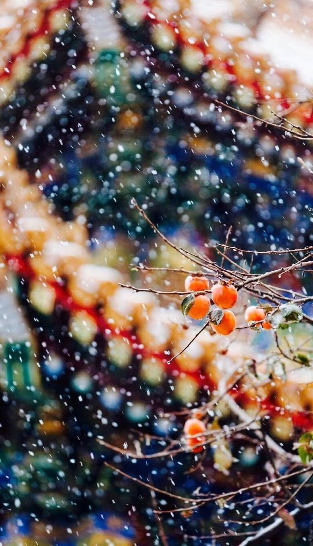 """白雪镶红墙,碎碎坠琼芳。 """"一下雪,北京就变成了北平。"""""""