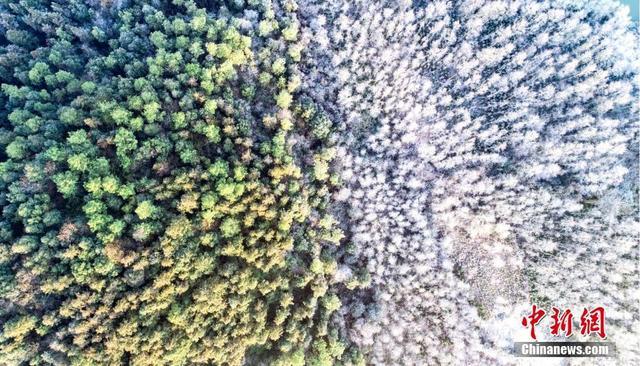 """连日来,江西省新余市仙女湖河下镇的田野山川被霜降覆盖,一片地势较低的树林上挂满霜冻,晶莹剔透,很是壮观。阳光照耀下,与高处的绿树相互映衬,显出一湾碧水向东流,""""半山苍翠半山霜""""的奇特景观。 伍荣达 摄"""