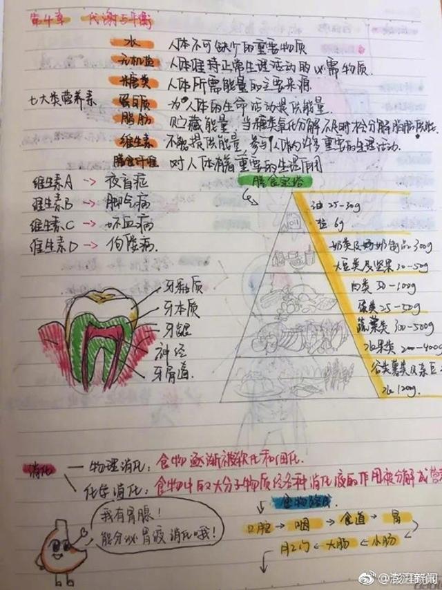 杭州初三女生钱烨楠整理的科学笔记别出心裁。她的笔记每一页都有彩色手绘插画,搭配简单的文字说明,让人一目了然。像胃、牙齿、心脏、肾脏都被她用卡通漫画的形式,画了个遍。连ABO血型都被整成了自带情节的连环画,主角是A、B、O、AB四个小人。图片来源于@澎湃新闻 的新浪微博。