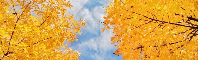 在河之南,在国之中,秋天如期来临,已经悄然生息地在河工大留下美丽的足迹,秋的色彩已渐次开始或深或浅,或淡或浓的涂抹在各种植被上,使工大的校园变得丰富多彩起来。(图/刘鹄志、覃秋欣、石昕炜、李朕、赵艳霞、张家乐)