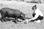 """女大学生回村当""""猪倌"""":对社会有意 带村民脱贫"""