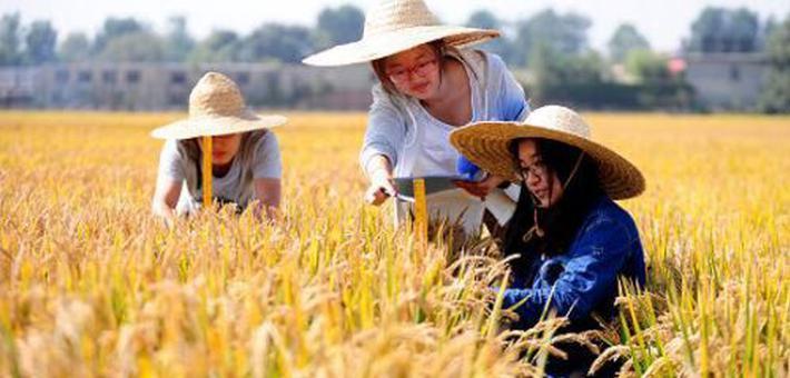 今日热点:在农大读书是什么体验?