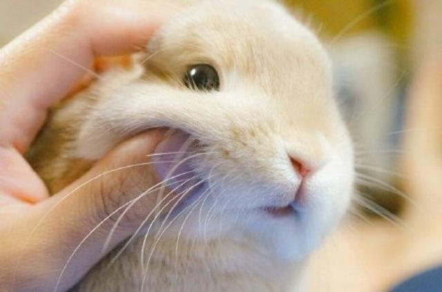 兔兔这么可爱,怎么可以捏兔兔。