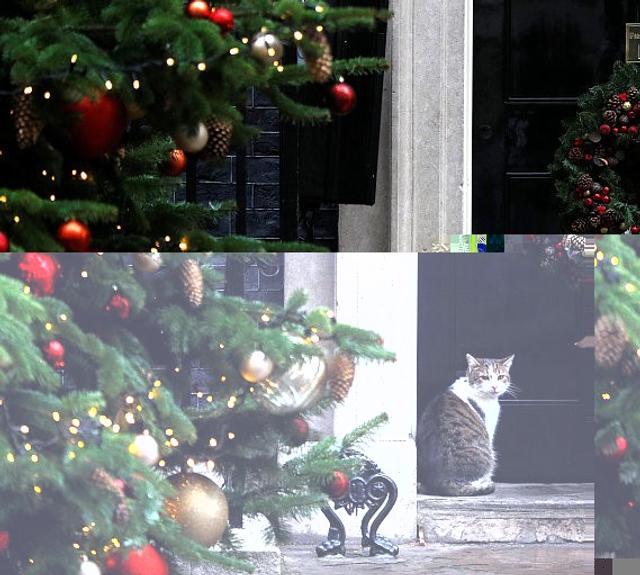 """日前,住在英国伦敦唐宁街10号首相官邸的猫咪拉里在其社交网站""""推特""""上""""发文"""",表示自己与英国大臣不同,哪里都不去。"""