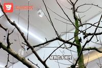 視頻|一顆樹可以結出40種果子,達沃斯論壇獨享