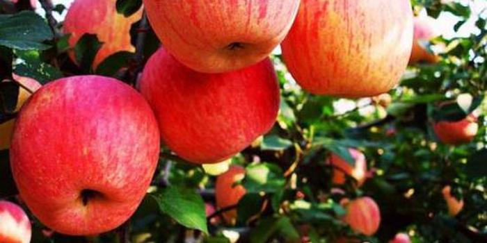 蘋果2001合約量能俱增 期價延續上行
