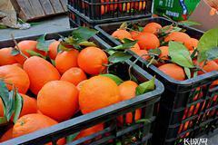 北京新發地批發市場暫時休市 另設蔬菜水果交易專區