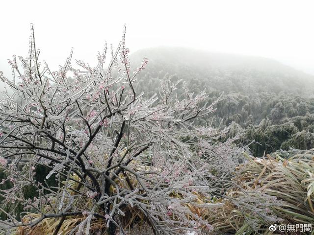 寒雪一以霁,浮尘了不生。花冷方能洁,香多不损清。——诗:八指头陀  ;摄影:无门关