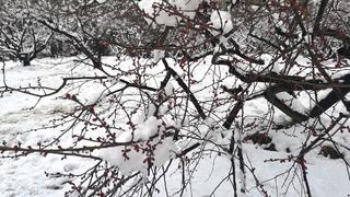 玄武湖公园雪景