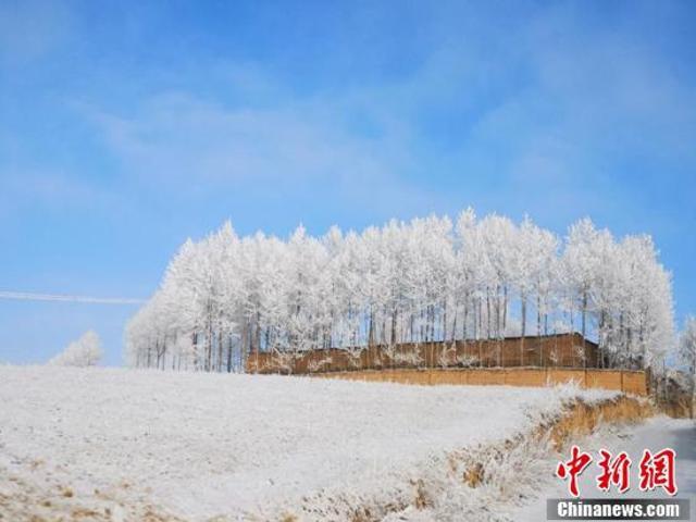 12月6日清晨,气温降到零下13.3摄氏度的青海海东地区出现雪淞。树木在阳光映照下,晶莹剔透,美如画卷,置身其间,恍若进入童话世界。马恩州 摄