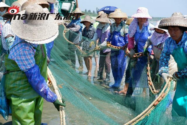 """湛江市坡头区南三岛,除了著名的""""南三听涛""""之外,莫过于""""拉大网""""了,有经验的老渔民们根据当天海潮的""""流水""""情况,在发现有""""鱼情""""的海面,把装满网具的小船驶离岸两三公里的海面,将长达两千多米的渔网慢慢放入海中,渔网在海面围成一个半圆形。图为渔民合力拉网场面。"""