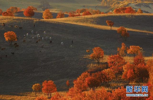 这是9月29日拍摄的塞罕坝国家森林公园秋景。金秋时节,位于河北省承德市的塞罕坝国家森林公园层林尽染,秋色怡人。 新华社发(潘正光 摄)