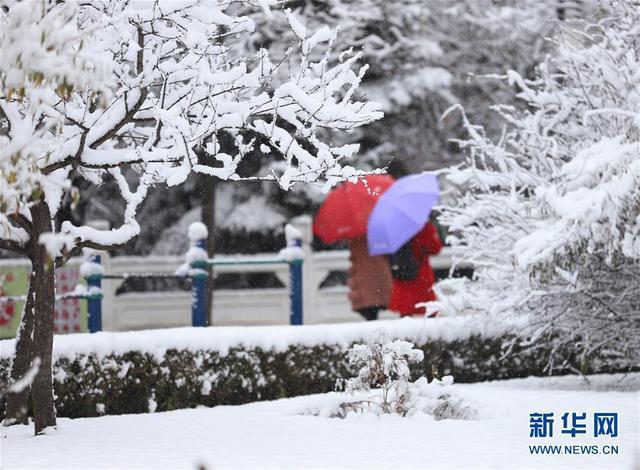 11月5日,市民漫步在雪花飞舞的平凉市崆峒区南山生态公园内。当日,甘肃省平凉市出现降雪天气,银装素裹的冰雪世界吸引市民前来欣赏雪景。新华社发(吴希会 摄)