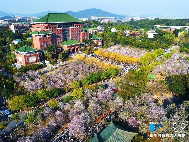3月10日,广州的华南农业大学上千亩娇艳欲滴的花卉盛开,从空中俯瞰一片粉红和金黄相间,春意盎然,引得四方游客纷至沓来。新华网发 蓝远峰摄