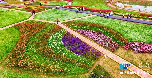 春风送暖,草长莺飞,高明郁金香农业主题公园内近600亩郁金香争芳吐艳,吸引了不少游客前来观赏。新华网发(梁斌 摄)