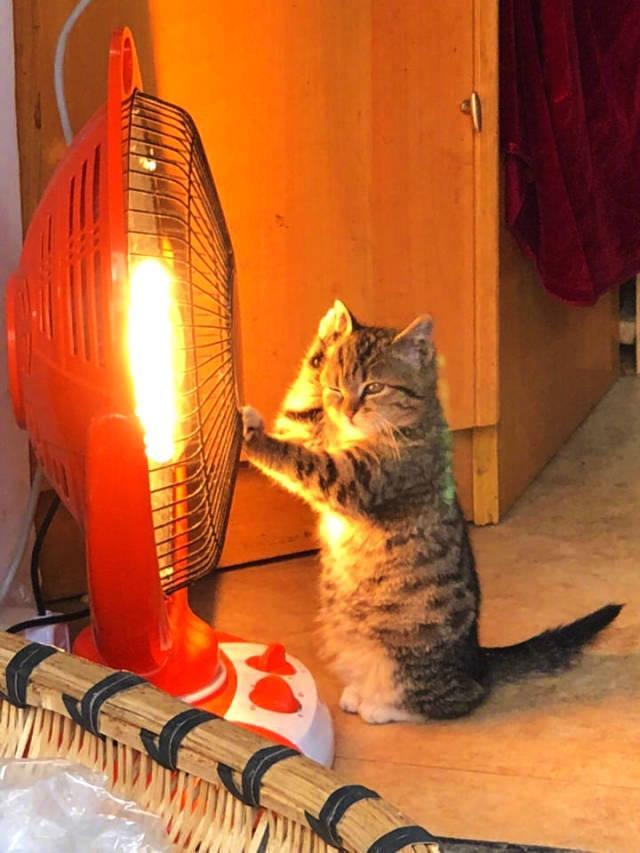 这两天,广东各地气温狂跌,早上起床爬出被子,都是一场远行,嗯,气温狂跌,冷的不只是我们动物们也要经受寒冷的考验。