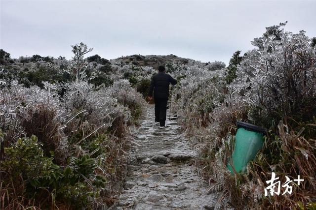 """1月9日,罗浮山景区迎来今年首个寒潮,在雨水、冷风、低温的交杂袭击下,海拔1296米的罗浮山飞云顶再现难得一见的""""冰挂雾凇""""景观。"""