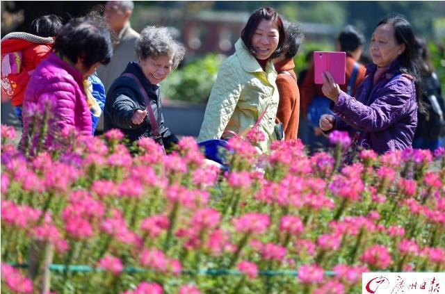 广州日报讯 昨天阳光明媚、春风和煦,天气非常好,市民心情也好。在广州流花湖公园,花红柳绿,生机盎然,市民在美景中嬉戏。
