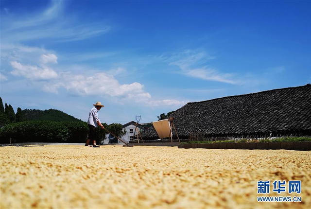9月9日,湖南张家界市永定区合作桥乡农民在晾晒稻谷。金秋时节,张家界进入中稻收获高峰期,农民在房前屋后晾晒收获的稻谷,一片丰收景象。新华社发(吴勇兵 摄)