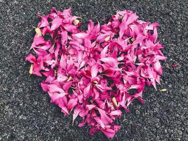 掉落的花瓣,都是爱你的形状。(摄影/新浪广东 陈秀静)