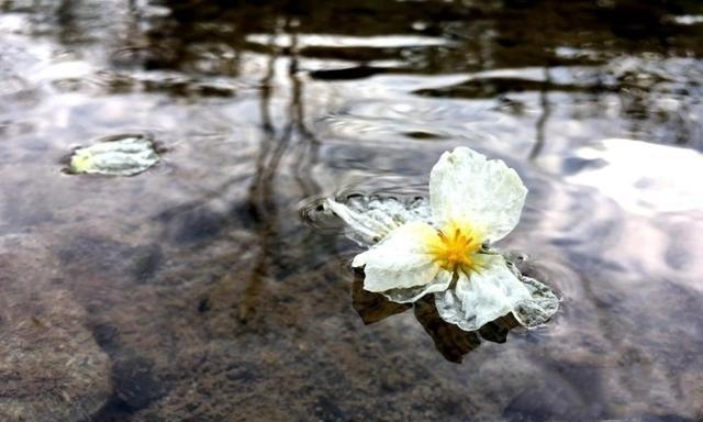 花朵在河里随波逐流的样子可真美