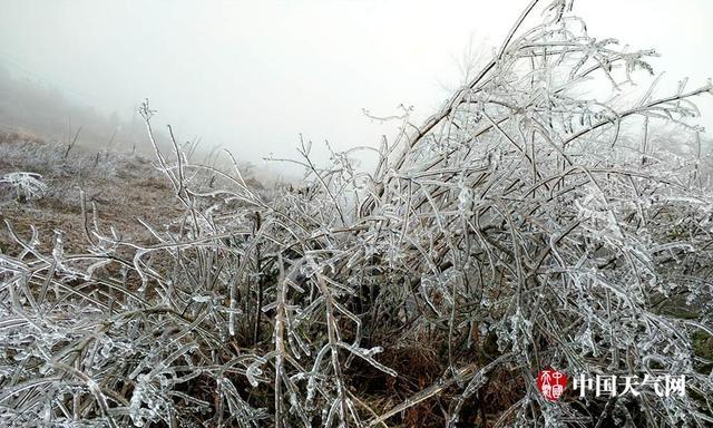 受冷空气持续影响,从4日晚上开始,桂林市全州县东山瑶族乡等高寒山区的气温降到了0℃以下,5日早晨最低气温达零下1.6℃,目前气温仍维持在零下1℃左右。低温让东山乡满山的树木上都挂满了雨淞,一片晶莹剔透,仿佛冰雕世界一般。(摄影/赵园 文/赵祖华)